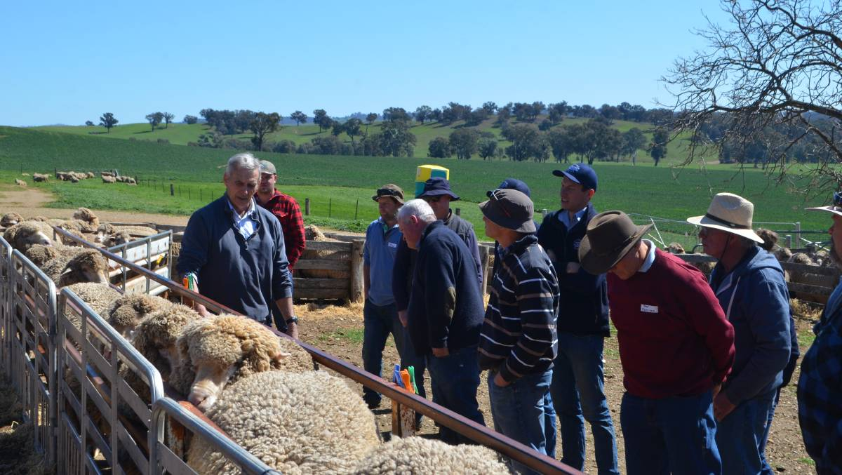 AWI sheep specialist Stuart Hodgson taking woolgrowers through the basic selection criteria at the field day held at Tarcutta.