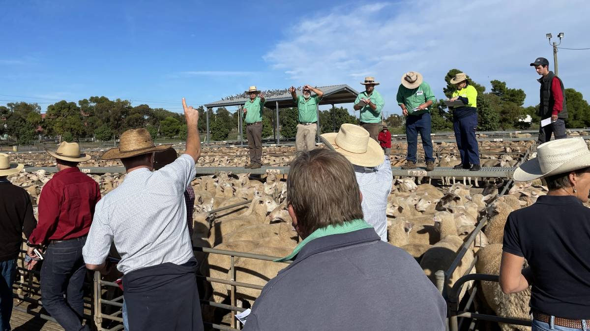 TAKING THE BIDS: Action from the Griffith sheep and lamb market. Picture: ALPA